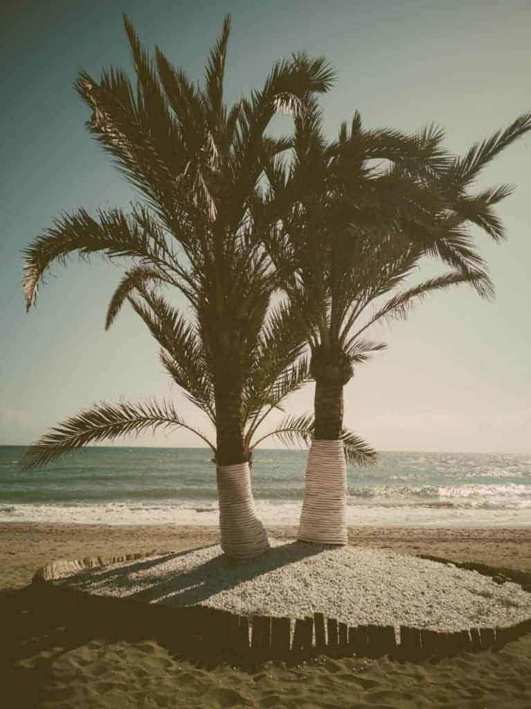 IMG 20190225 150325 767x1024 - Faszination Reisen #2 - Malaga - Marbella - Gibraltar