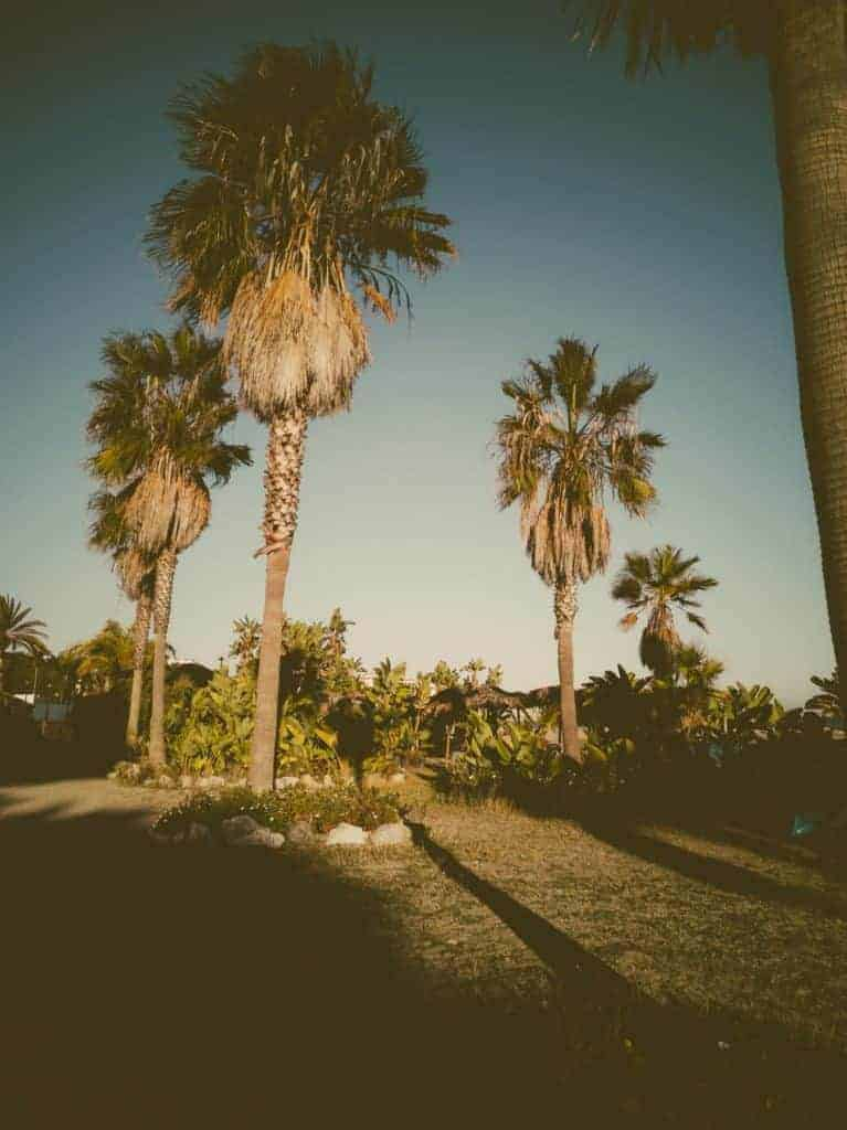 IMG 20190226 180938 767x1024 - Faszination Reisen #2 - Malaga - Marbella - Gibraltar