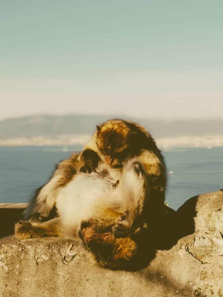 IMG 20190227 094411 768x1024 - Faszination Reisen #2 - Malaga - Marbella - Gibraltar