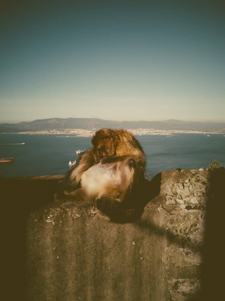 IMG 20190227 094426 767x1024 - Faszination Reisen #2 - Malaga - Marbella - Gibraltar